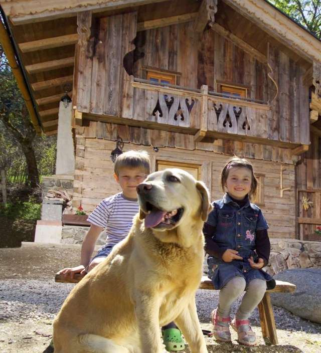 Dog friendly Chalets and cabins in the alps